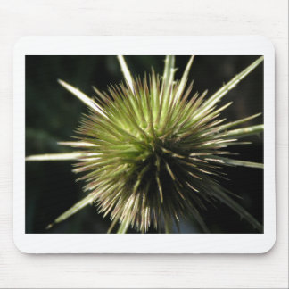 Teasel on display mouse pad