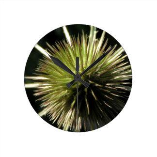Teasel on display round clock