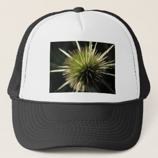 Teasel on display trucker hat
