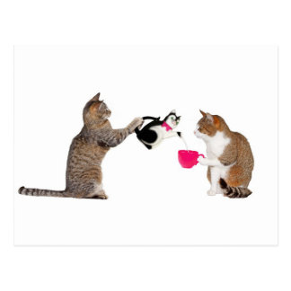 Teatime for kitty cats postcard