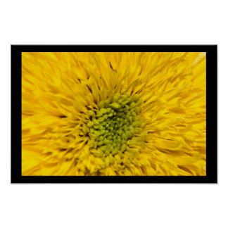 Teddy Bear Sunflower Blossom Poster