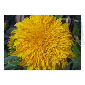 Teddy Bear Sunflower Card