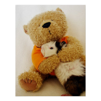 Teddy Hugs A Guinea Pig Poster