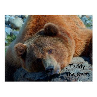 Teddy the Grizz Postcard
