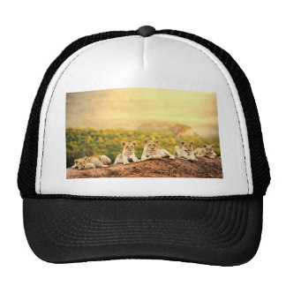 Teenage Lions Watch From A Hill Cap