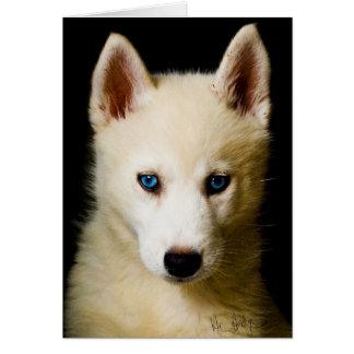 Tehya - Siberian Husky Card