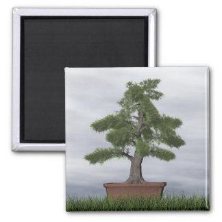Temple juniper tree bonsai - 3D render Magnet