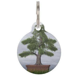 Temple juniper tree bonsai - 3D render Pet Tag