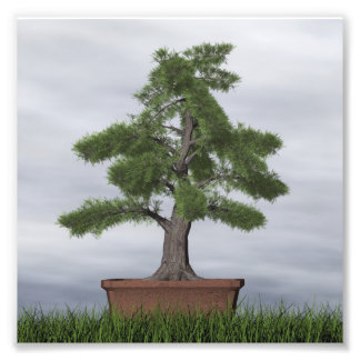 Temple juniper tree bonsai - 3D render Photo Print