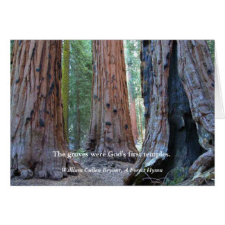 Temple of the Groves - Sacred Sequoia Trees, Quote Card