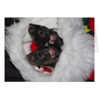 Templeton & Wilbur Christmas Card