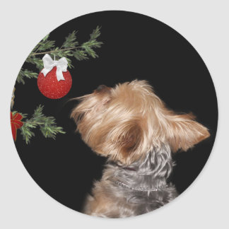 Tempted Yorkie Christmas Classic Round Sticker
