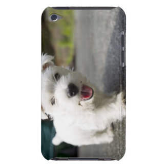 Ten week old female west highland terrier barely there iPod case