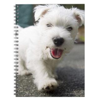 Ten week old female west highland terrier notebooks