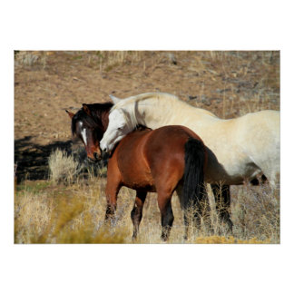Tender Moment of a Wild Stallion & Mare Poster