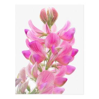 Tender pink field more flower postcard
