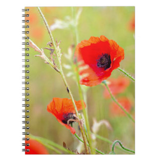 Tender shot of red poppies on the field notebooks