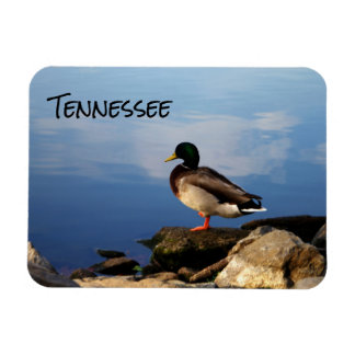 Tennessee Duck Magnet