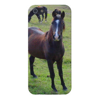 Tennessee Horse iPhone 5 Case