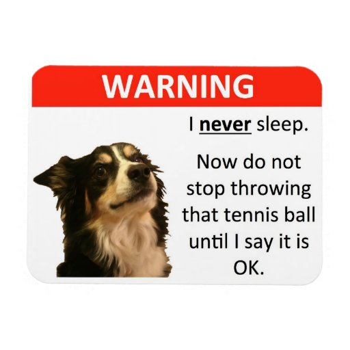 Tennis Ball Warning (Border Collie) Flexible Magnets