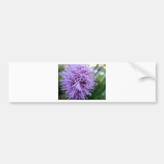Tentacle Spider Violet Flower Bumper Sticker