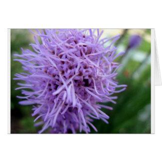 Tentacle Spider Violet Flower Card