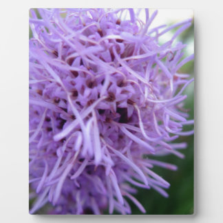 Tentacle Spider Violet Flower Plaque