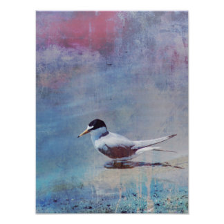 Tern by Shore 12x16 Archival Matte Poster Print