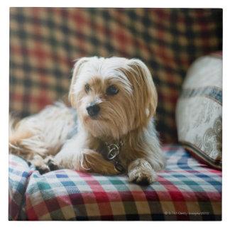 Terrier lying on checkered blanket large square tile