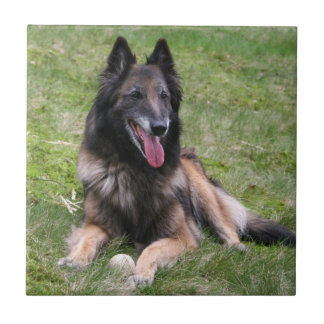 Tervuren Belgian Shepherd dog tile or trivet