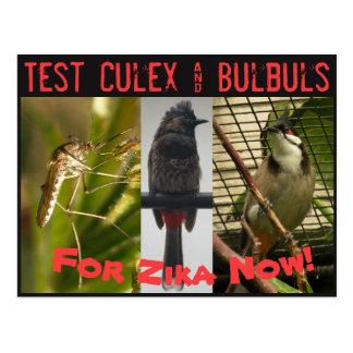 Test Culex & Bulbuls Postcard by RoseWrites