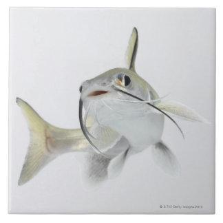 Tete sea catfish (Hexanematichthys seemanni) 2 Tile