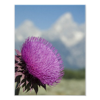 Tetons Thistle Poster