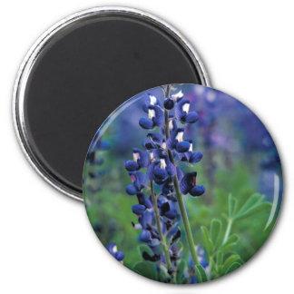 Texas Bluebonnet-2-Best 6 Cm Round Magnet