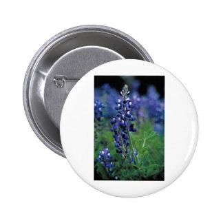 Texas Bluebonnet-2-Best Button