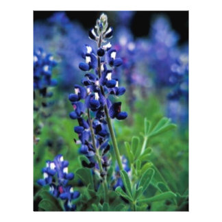 Texas Bluebonnet Custom Flyer