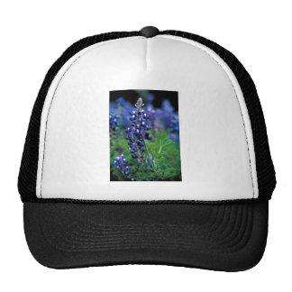 Texas Bluebonnet Hats