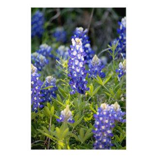 Texas Bluebonnet Photo Print