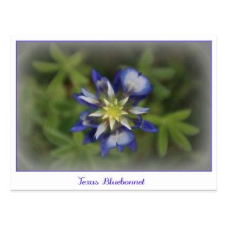 Texas Bluebonnet Postcard