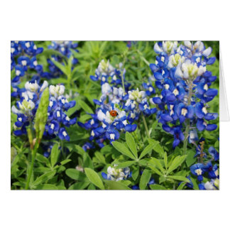 Texas Bluebonnets Card