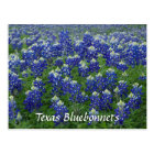 Texas Bluebonnets Field Photo Postcard