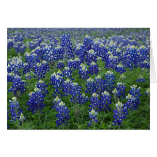 Texas Bluebonnets Photo Blank Note Card