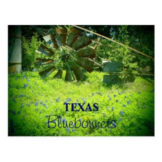 Texas bluebonnets post cards