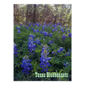TEXAS BLUEBONNETS POSTERS