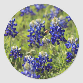 Texas Bluebonnets Sticker