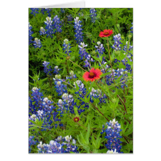 Texas Bluebonnets with Indian Blankets Card