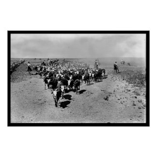 Texas Cattle Drive Poster