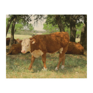 Texas Cow in Pasture Wood Prints