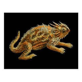 Texas Horned Lizard Postcard
