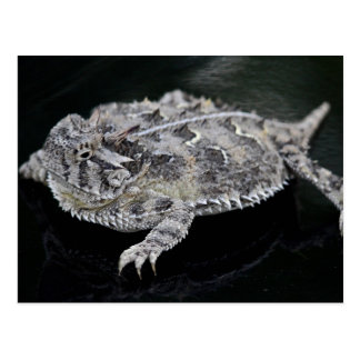 Texas Horned Lizard - Texas State Reptile Postcard